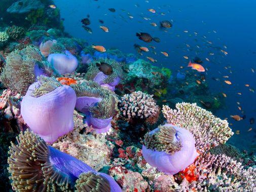 comofish-ari-atoll-maldives_72852_990x742