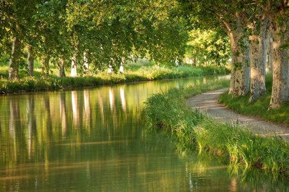 platanes-canal-du-midi 4