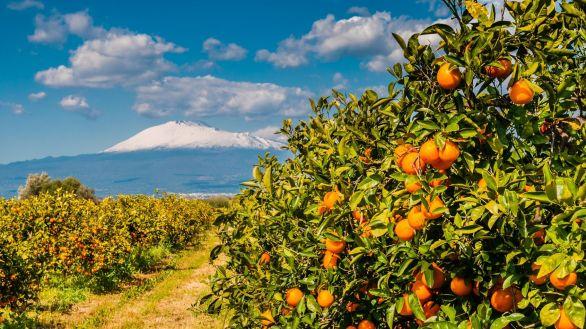 Orangenplantage am Fue des schneebedeckten tna; Sizilien
