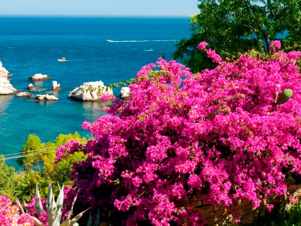 coastal scene with flowers sicily